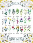 Plantas que atraen Abejas
