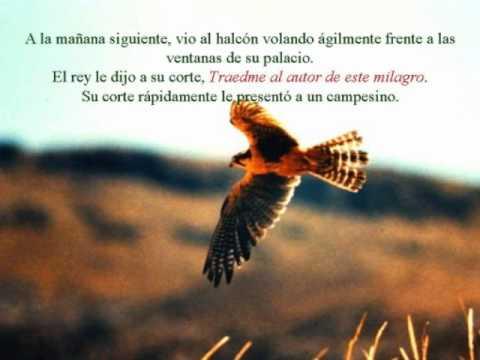 Halcon volando