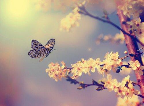 mariposa-flor-blanca